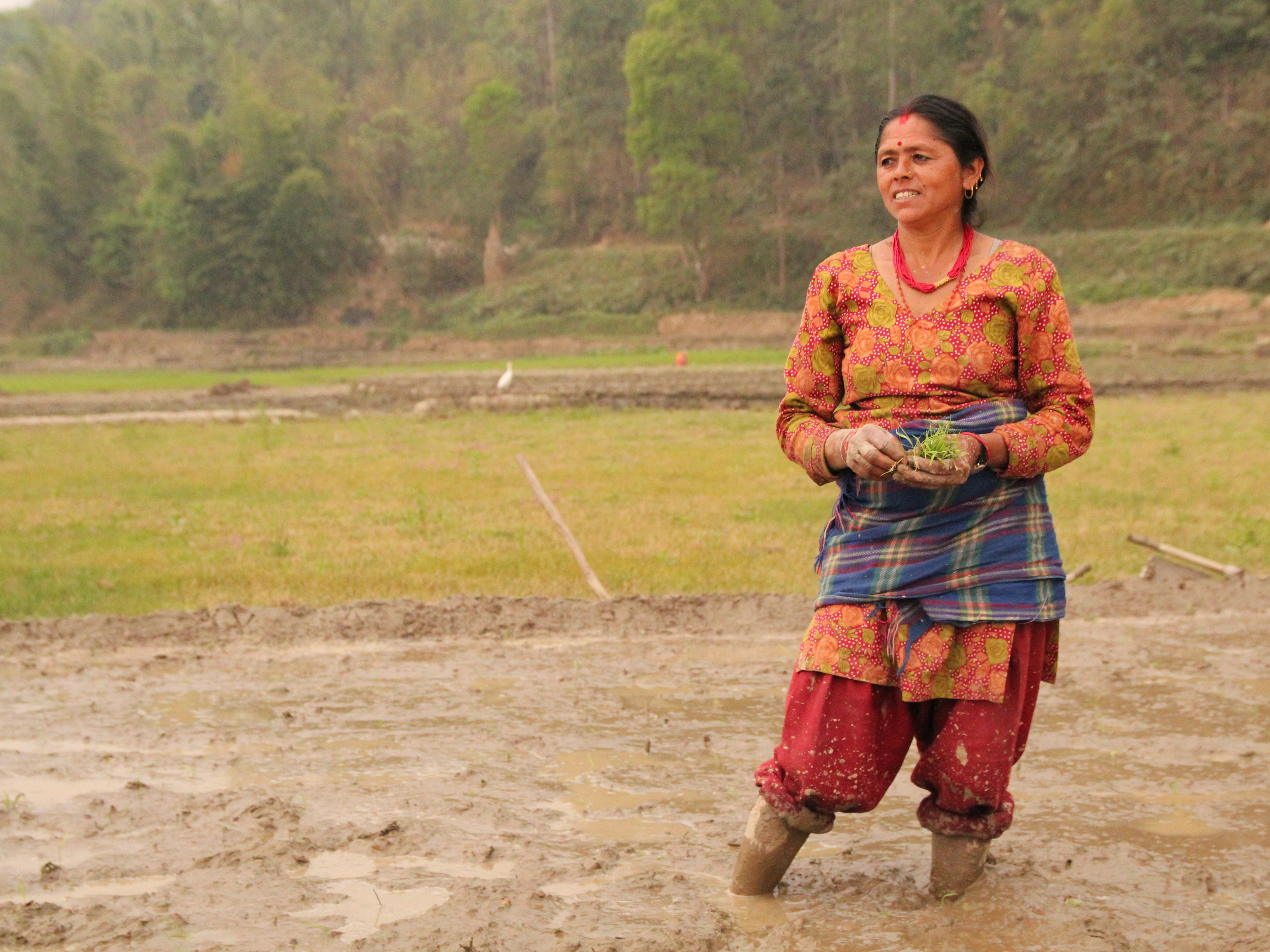 Apsara Bharati is watching over her field in Nepal, where she and her neighbors are using the system of rice intensification to plant seedlings. (Danielle Preiss/NPR)
