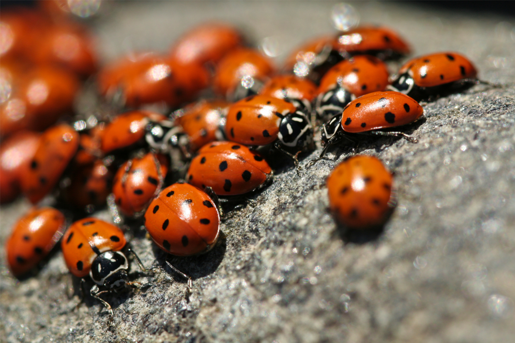 A new global review says that the total mass of insects is falling by 2.5 percent annually (Sharon Mollerus/flickr).