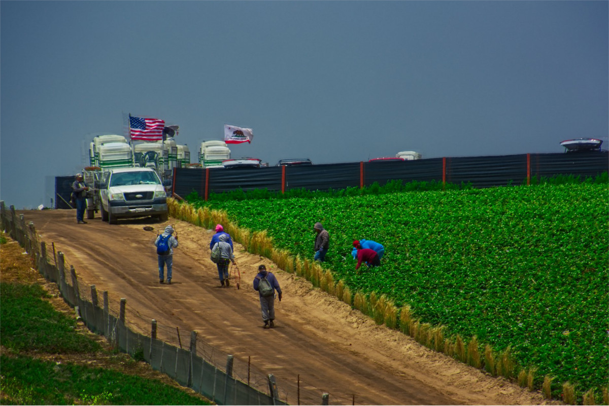 California farmers this year said in a survey that they often struggle to hire enough workers, even when offering higher wages or seeking H-2A visas. (Photo: akahawkeyefan/flickr)