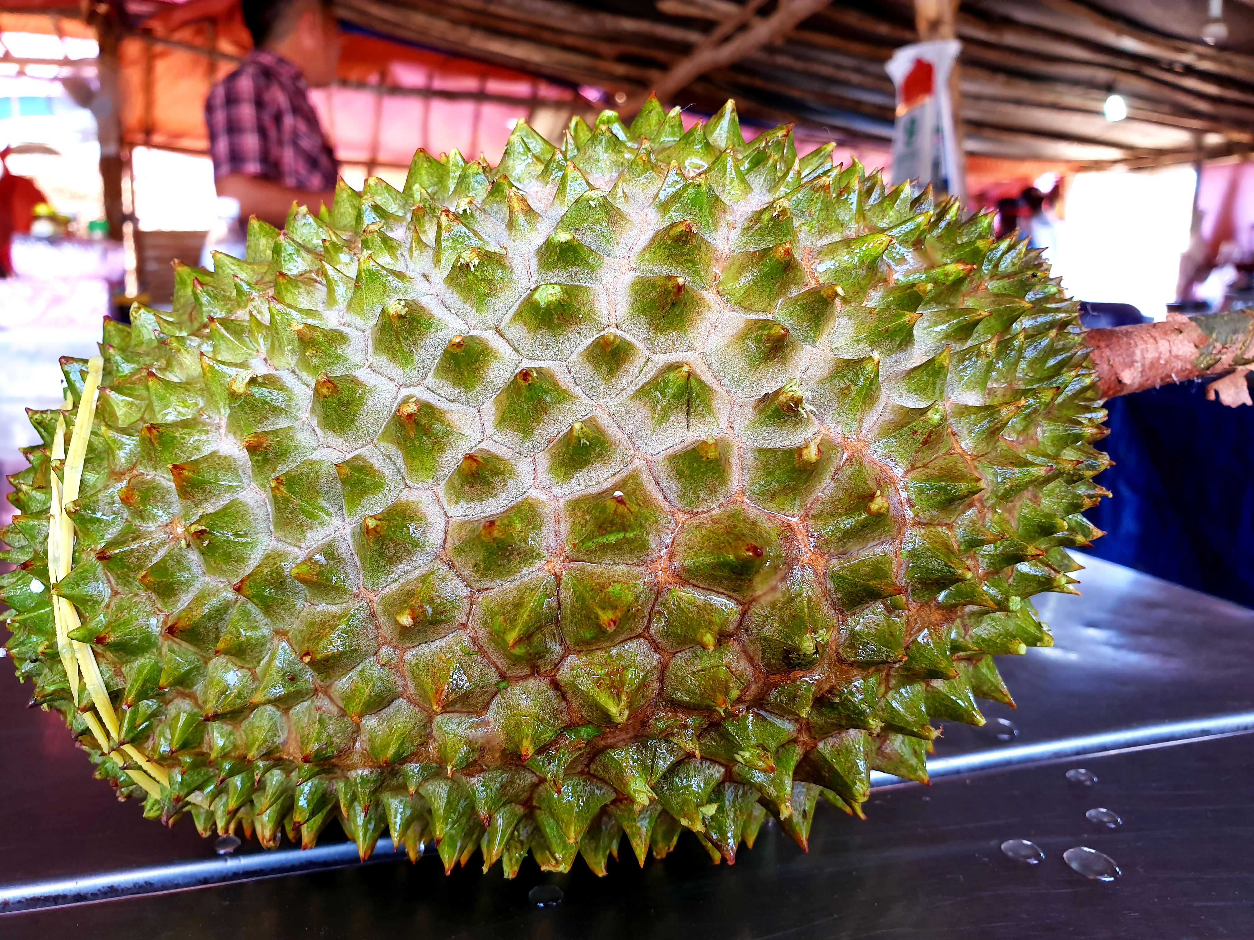 A Malaysian Musang King durian, much sought after by consumers in China. (Michael Sullivan for NPR)