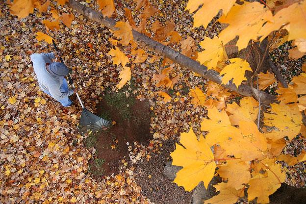 a man raking leaves under a tree.