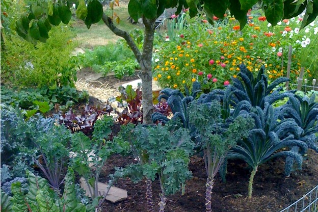 garden of kale