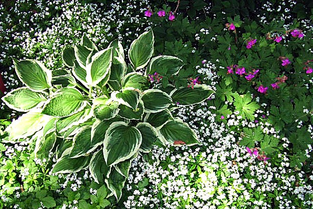carpeting plants