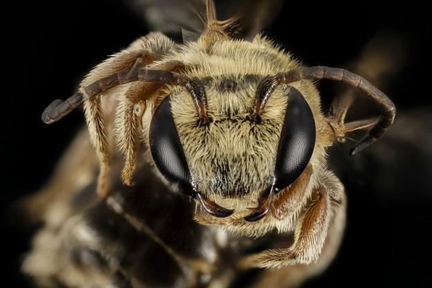 bee brain