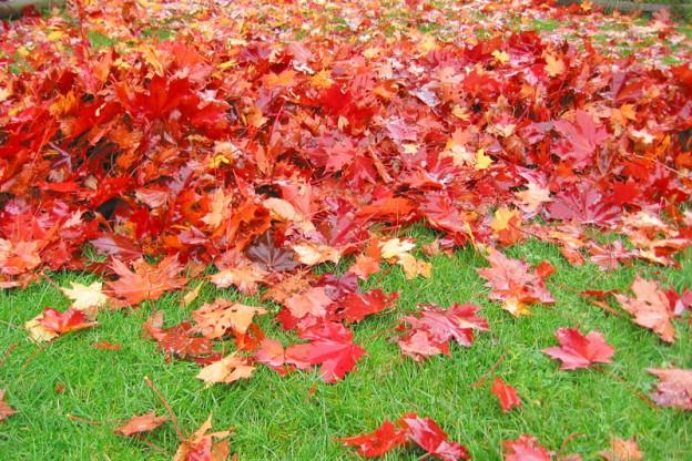 raked leaves