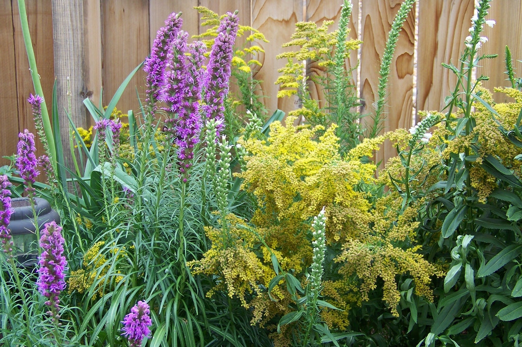 Gayfeather, Goldenrod and Obedient Plant intermingled in a bed, (Patrick Standish, Flickr).