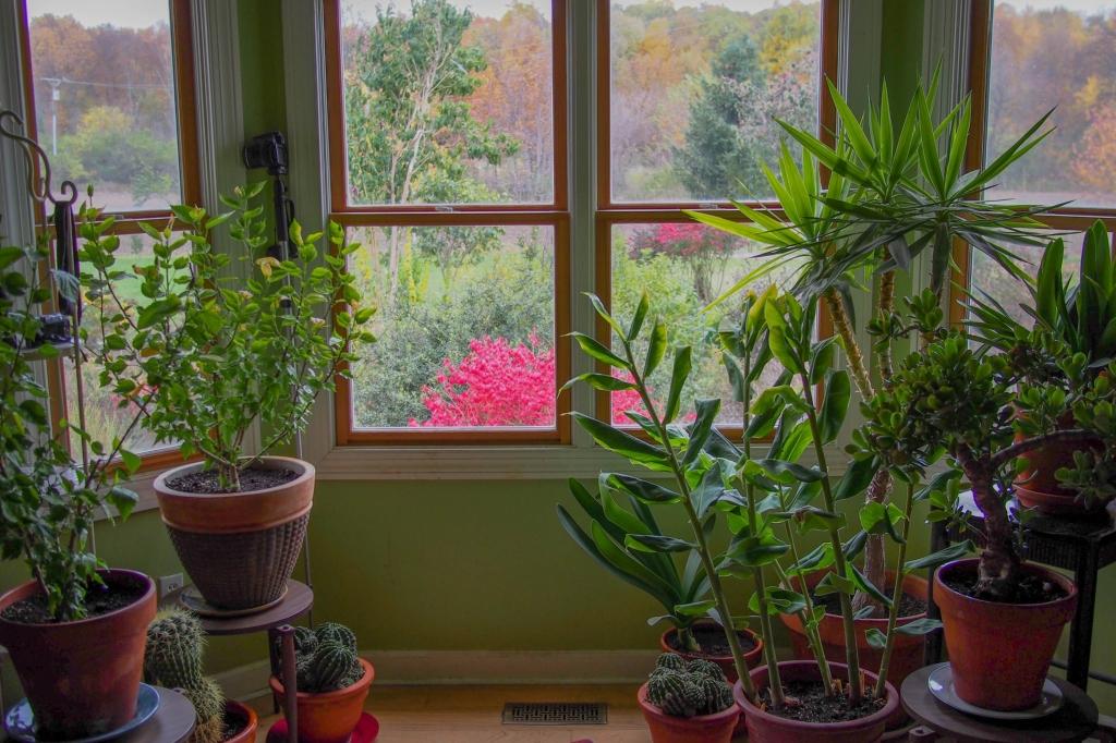 Houseplants (F. D. Richards, Flickr).