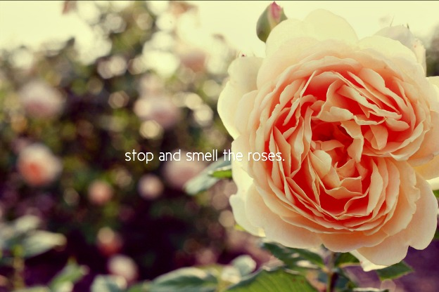 Stop and smell the roses…