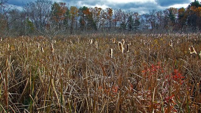 Researchers Develop Online Landscape Design Testing News 2013 Indiana Public Media