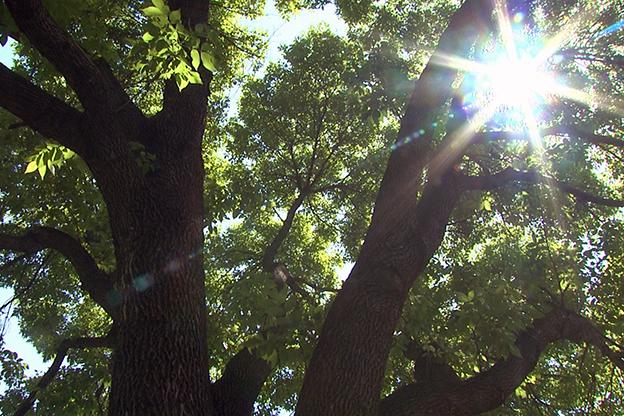 tree in Bryan park