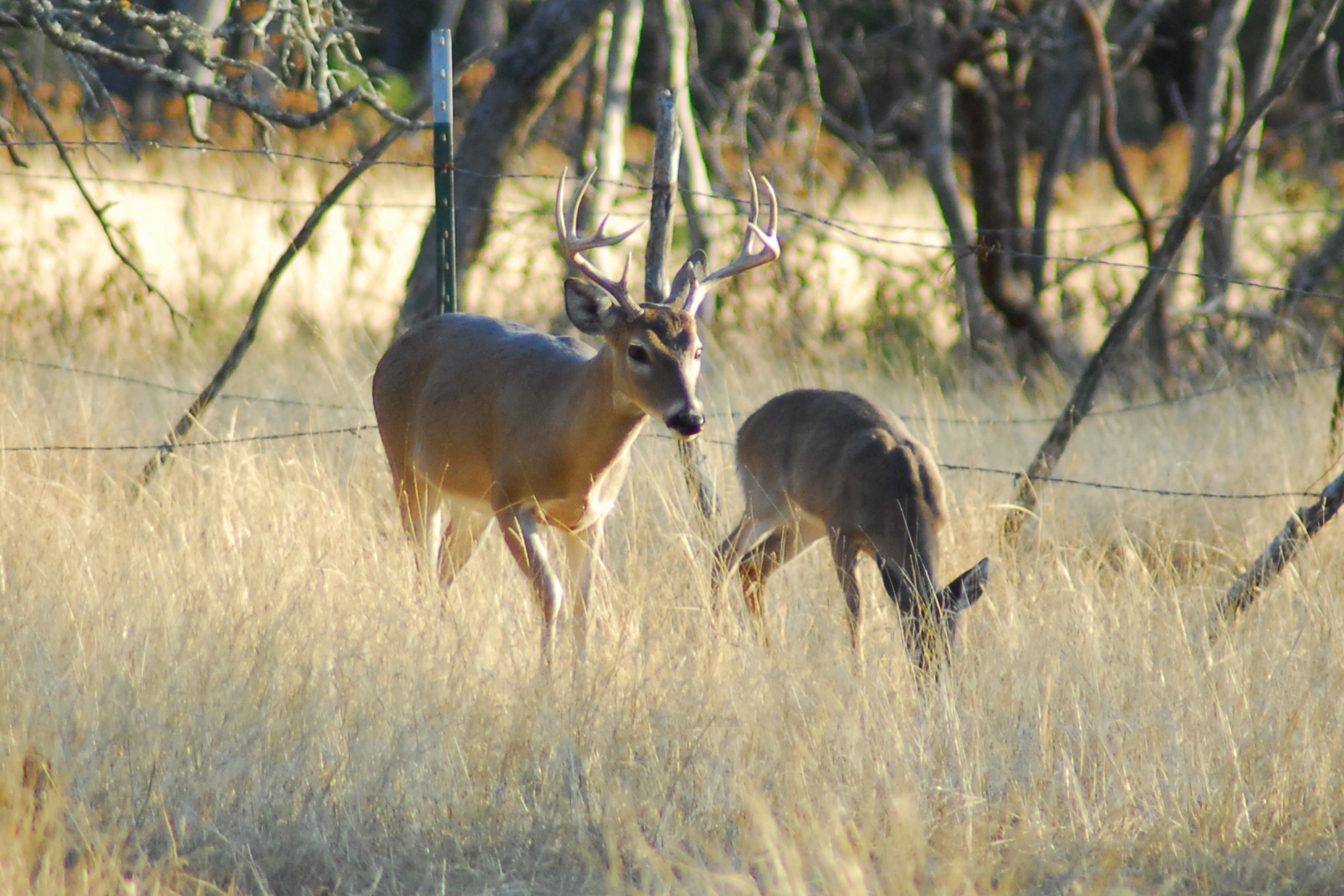 Indiana's high-fenced deer hunting industry has been in the midst of a lawsuit for nearly a decade.