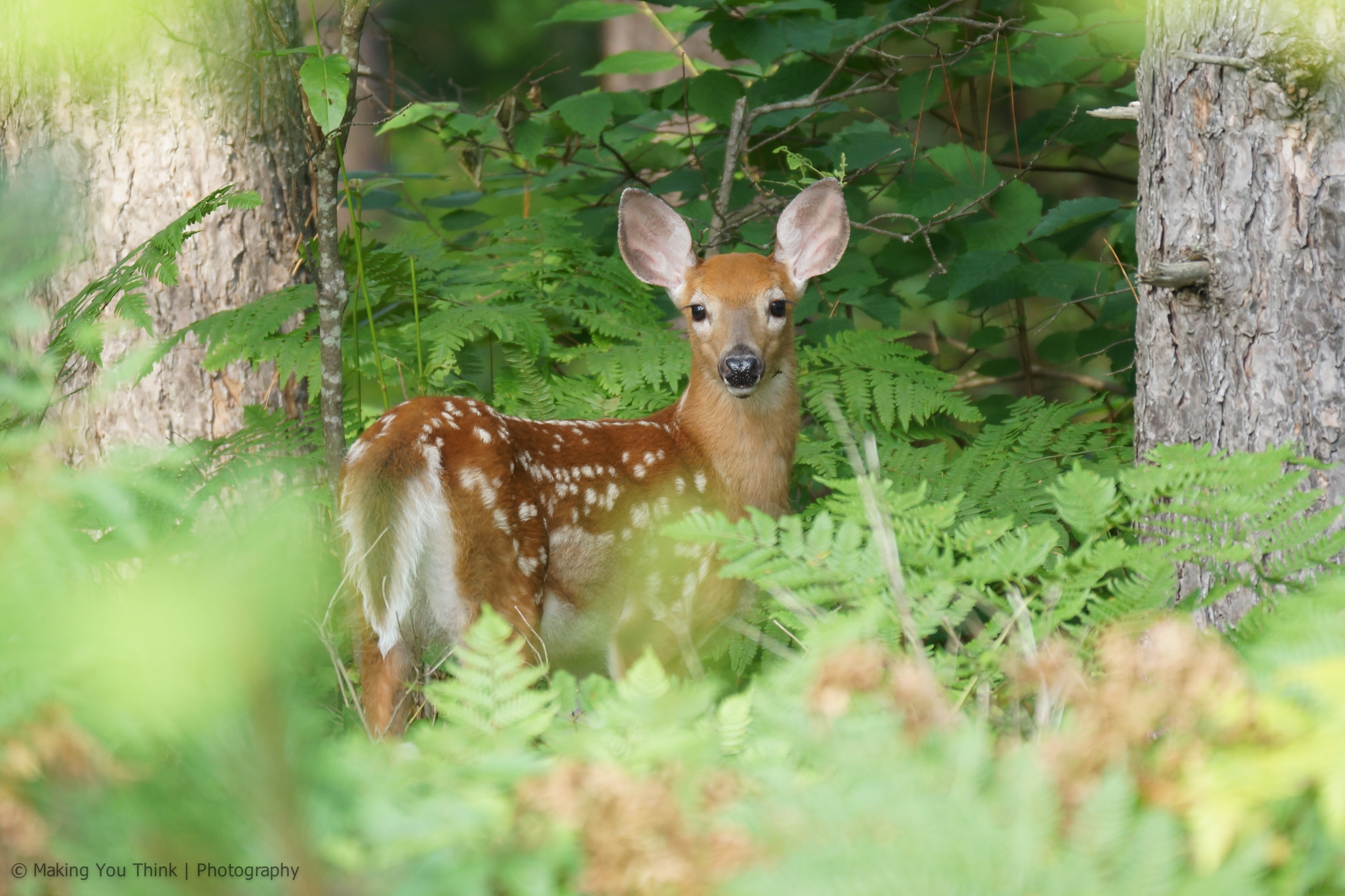 Hunting provides an economical way to quell the deer population during the fall.