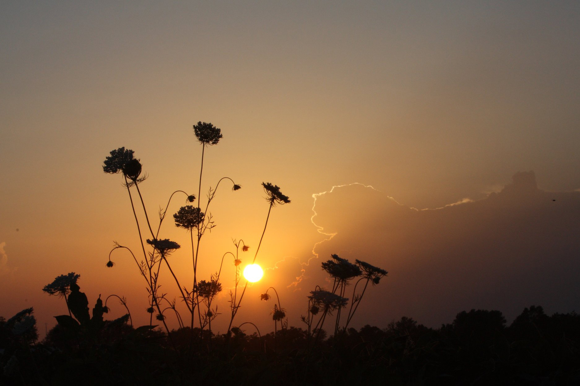 flowers in a sunset