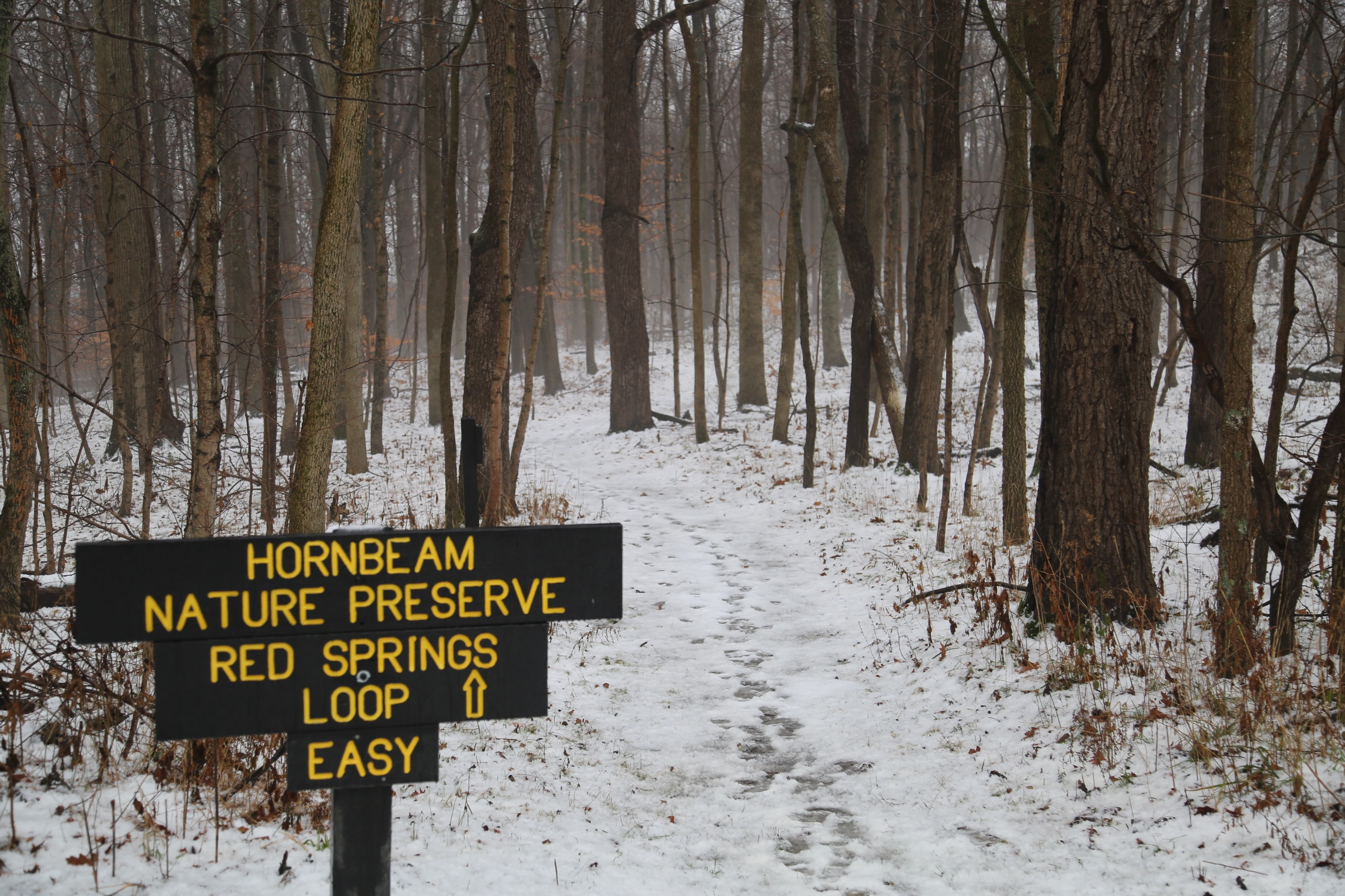 The Hornbeam Nature Preserve is within Whitewater Memorial State Park.