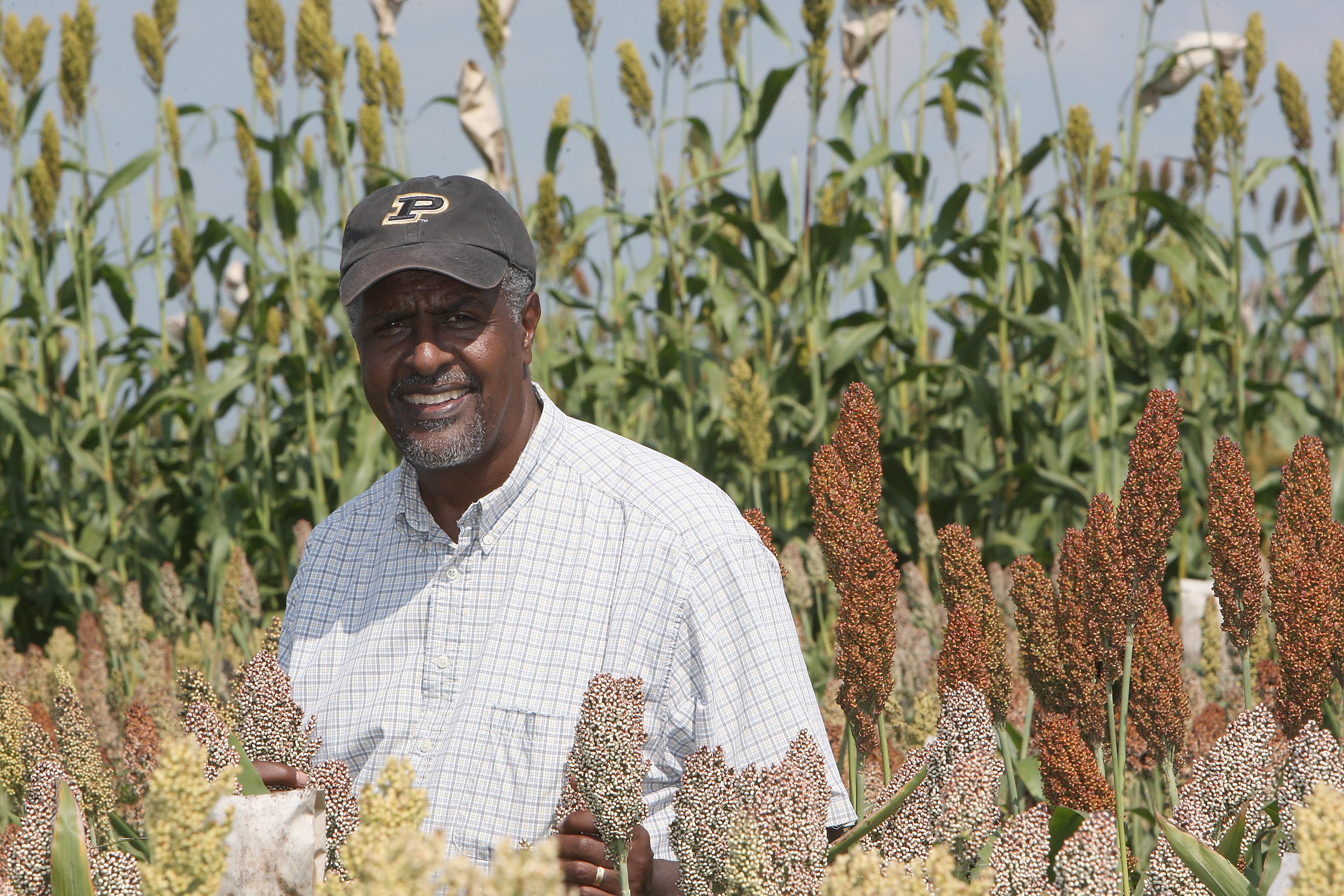 Gebisa Ejeta, director of the Purdue Center for Global Food Security, surrounded by a crop of sorghum.