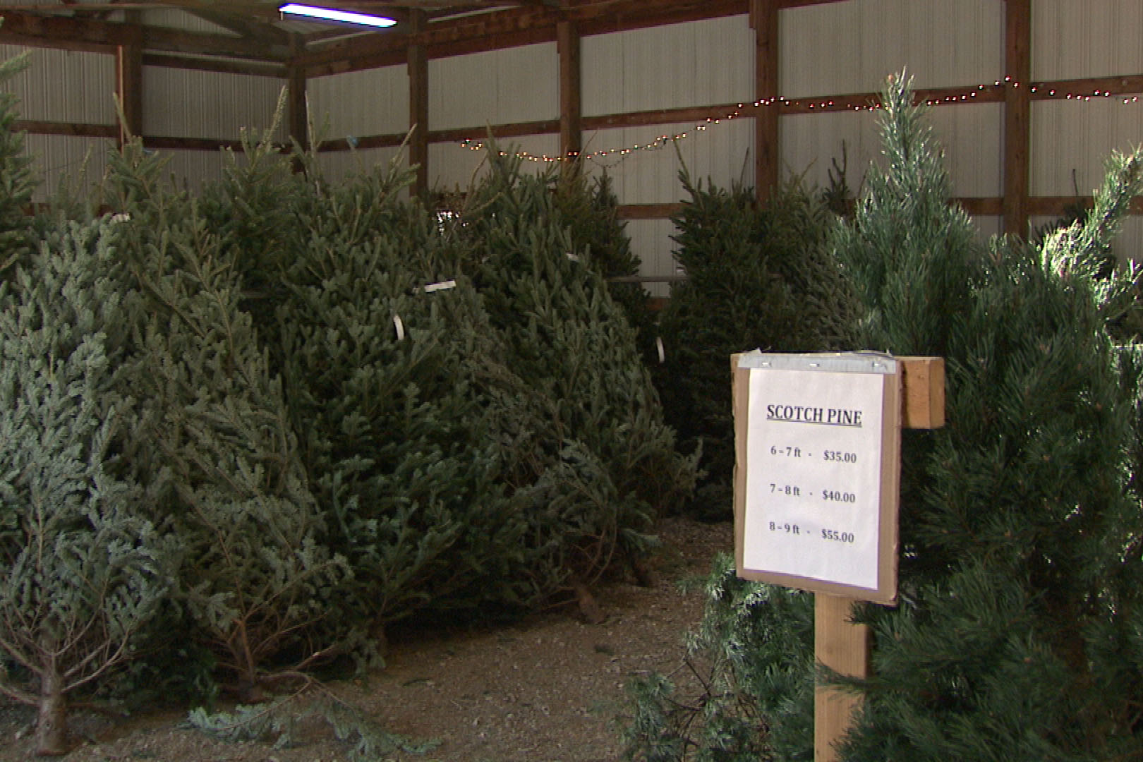 The national shortage stems from the 2007 recession. Christmas tree farms planted fewer trees then because of low demand and those trees are just now maturing.