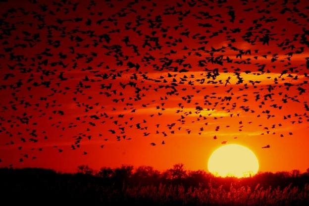 black birds sun